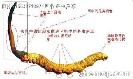 """威海回收冬虫夏草在XVI""""统一价格""""回收虫草"""